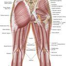 Five Muscles of Sacroiliac Stabilization – Part 1 – Piriformis