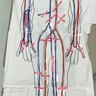 Anatomy Practicals- Stackables that Teach: A Life-Sized Human Body Project- The Cardiovascular/Circulatory System  System!