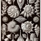 Ernst Haeckel Art