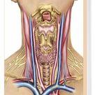 Box Canvas Print. Anatomy of human neck