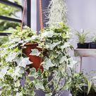 20 Best Plants for Cleaning Indoor Air