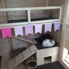 Rabbit care advice - Best 4 Bunny