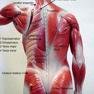 BIOL 160: Human Anatomy and Physiology