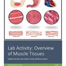 Lab Activity: Overview of Muscle Tissue (Skeletal, Smooth, Cardiac)