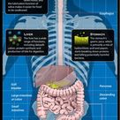 Digestive System Facts, Function & Diseases