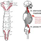 Supporting Psoas ~ June 2014