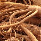 Medicinial Uses for Asian Ginseng