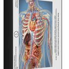 1000 Piece Puzzle. Human body showing heart and main circulatory