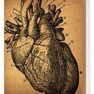 Box Canvas Print. Human Heart Engraving