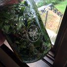 Mugwort Tincture Extract Fresh