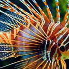 صور اسماك 2019 اجمل خلفيات اسماك ملونه عرض هذه الصور المعلقة للأسماك في المياه المالحة في هذه المعارض الصور تم تقديم هذ Colorful Fish Sea Fish Tropical Fish