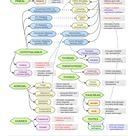 Common Endocrine Hormones Chart - StudyKorner