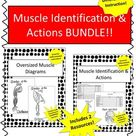 Muscle Id & Actions WS w/ Diagrams BUNDLE  Great for Practice&Differentiation