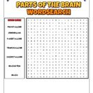 Parts Of The Human Brain: 2 Science Puzzles: Wordsearch & Word Scramble