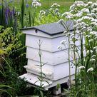 Honey Bees Help to Fight Cancer   Budwig