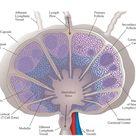 All About Lymph Node Follicles