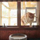 Outdoor Cat Habitat