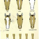 Horse Anatomy Pictures Think Like a Horse Rick Gore Horsemanship ®