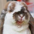 Rabbit Jokes