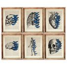 Set of 6 Prints, Human Anatomy Poster, Human Skull Dictionary Art Print Set, Anatomical Heart Print,