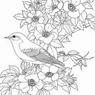 Bluebird Coloring Pages - Best Coloring Pages For Kids