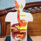Project of digestive system