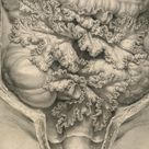 Dissection of the abdomen showing the mesentery, a membrane providing blood supply and support to the small intestine