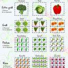 Hochbeet bepflanzen Fruchtfolge und schädlingsvertreibende Pflanzen