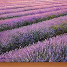 Oil painting original,Lavender fields painting,Provence lavender,Paintings on canvas original,Lavender,Gifts for her,Lavender painting