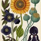 Beautiful Biology Illustrations by Katie Scott   Inspiration Grid