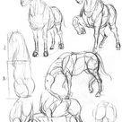 【干货】春哥制造:人体结构绘画药方系列(二)|插画|创作习作|画画的春哥         - 原创作品