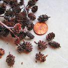 Alder Cones Miniature Cones Tiny Brown Cones   Etsy
