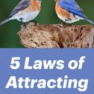 5 Laws of Attracting Bluebirds