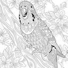 Coloring pages for adults. Digital coloring page. Budgie Parrot Bird. Adult coloring pages. Printable adult coloring book. Instant download.