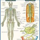 QuickStudy   Lymphatic System Laminated Study Guide