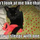 Funny Cat Captions