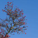 Bunte Pflanzen im Winter: Die 10 schönsten Arten - Plantura