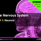 PPT - Nervous System (INTRODUCTION) - Neurons, Impulses, CNS & PNS, Reflexes