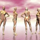 1000 Piece Puzzle. Female muscular system from four points of