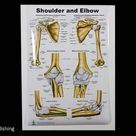 Shoulder and Elbow Large Poster