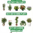 Best Air Puryfying Plants Indoor - Air filtering plants house plants Best Air Cleaning Plants Indoor