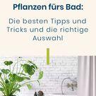Pflanzen fürs Bad: Die besten Tipps und Tricks und die richtige Auswahl