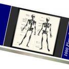 1000 Piece Puzzle. Labelled Human Skeleton. Engraving