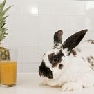 Rabbit saved by pineapple juice - CBBC Newsround