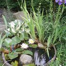 Mini Gartenteich im Kübel anlegen und bepflanzen - DIY Idee