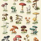 Mushroom Varieties Print - Food Print - Mushroom Chart - Autumn Print - Kitchen Art - Mycology - Fungi