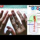 Aorta, Ascending Aorta, Arch of Aorta, Descending Aorta || All artery branches by EduLesson
