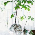 Rooting Plants in Water Is the Easiest Way to Bring Greenery Indoors