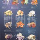 Crab Species