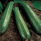 Spineless Beauty, Zucchini Seeds | Zucchini